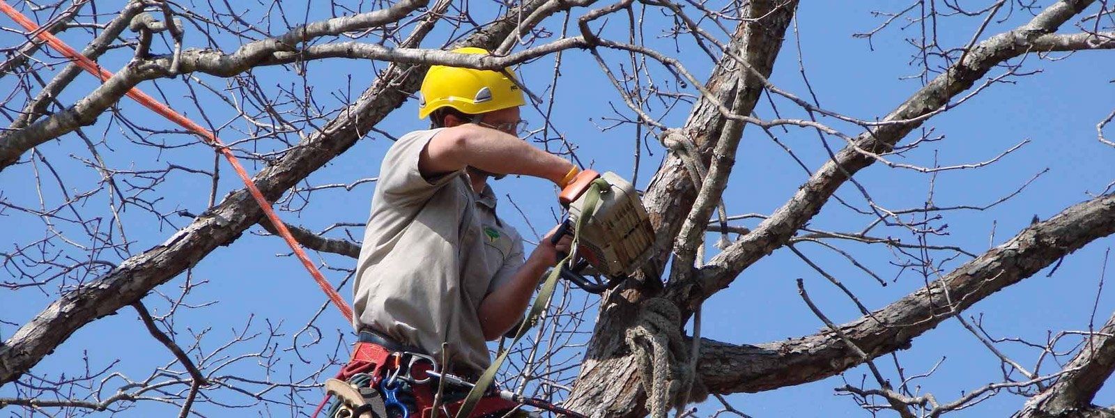 Tree lopping Sunshine coast