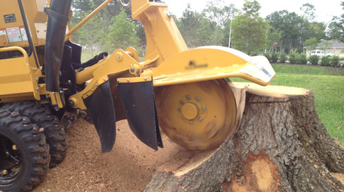 Yandina stump removal